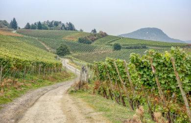 Rotweinwanderweg Ahrtal Deutschland