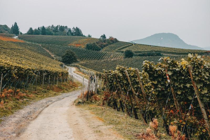 Ahrtal Rotweinwanderweg Herbst