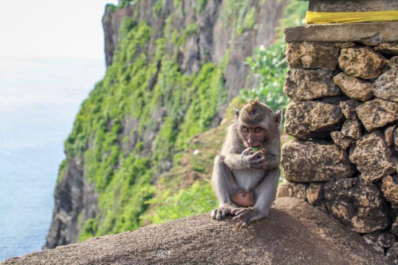 Bali Uluwatu Affen