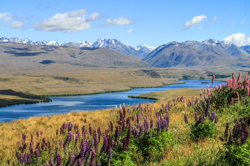 Neuseeland Reisetipps cover image