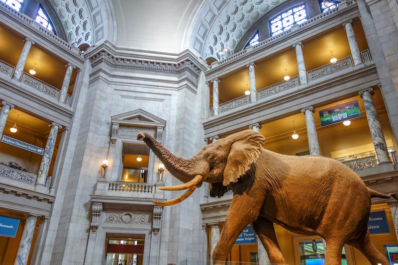 Washington DC Natural History Museum