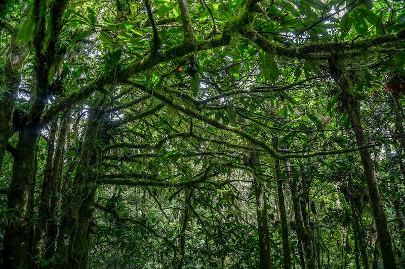 costa-rica-rundreise-monteverde-canopy