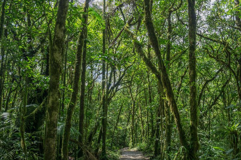 rundreise-costa-rica-tenorio-nationalpark