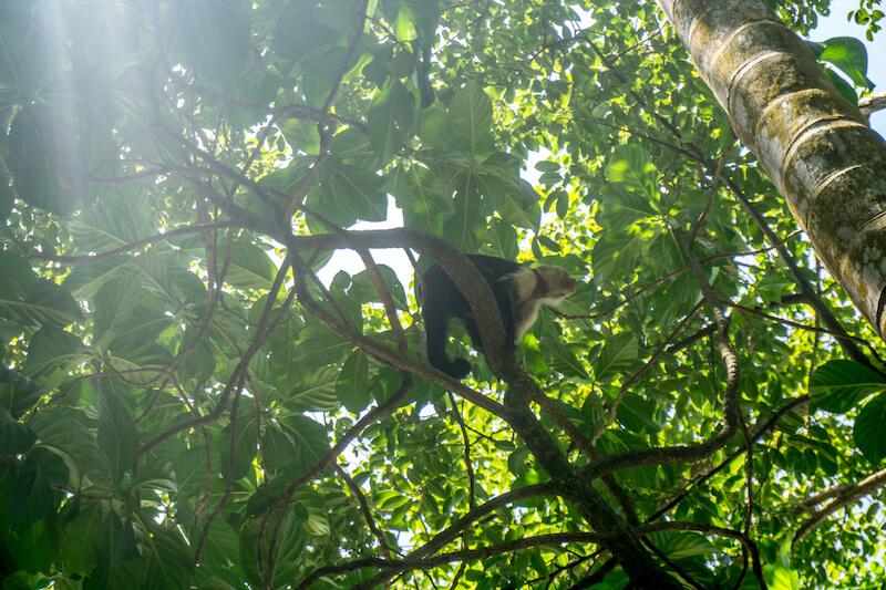 costa-rica-rundreise-cahuita-national-park