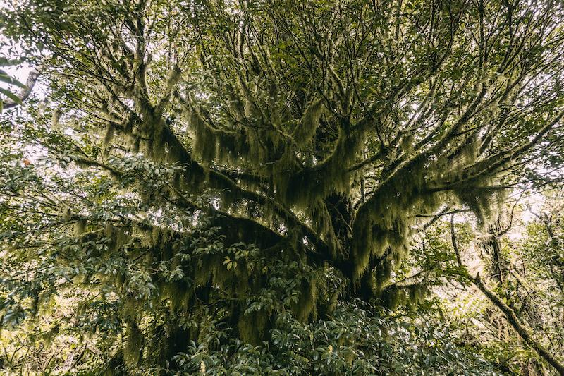 Monteverde Costa Rica Vegetation