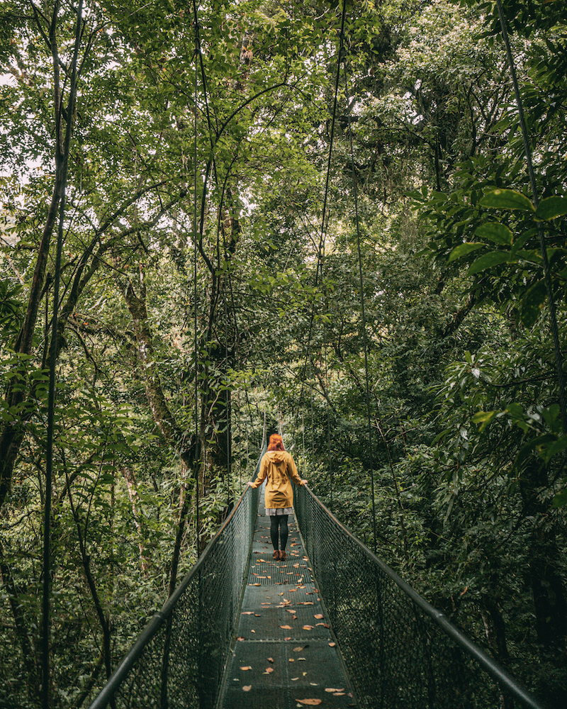 Monteverde Nebelwald Hängebrücke