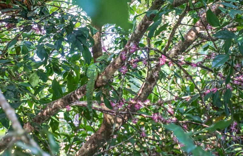 tortuguero-nationalpark-costa-rica