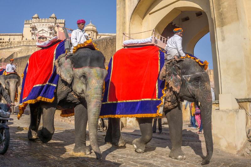 Jaipur Amber Fort Rajasthan Indien