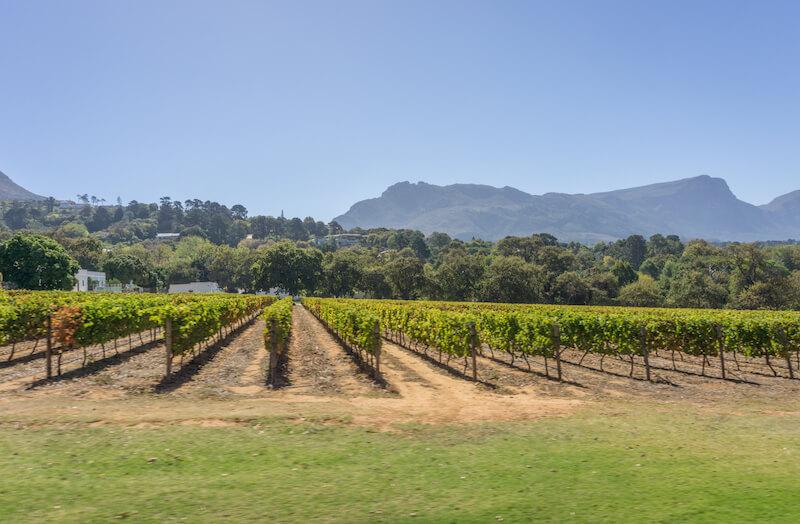 Kapstadt Sehenswuerdigkeiten Constantia Weingebiet