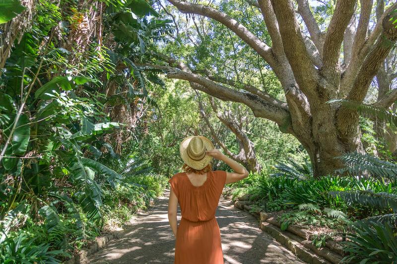 Kapstadt Sehenswuerdigkeiten Kirstenbosch Botanical Garden
