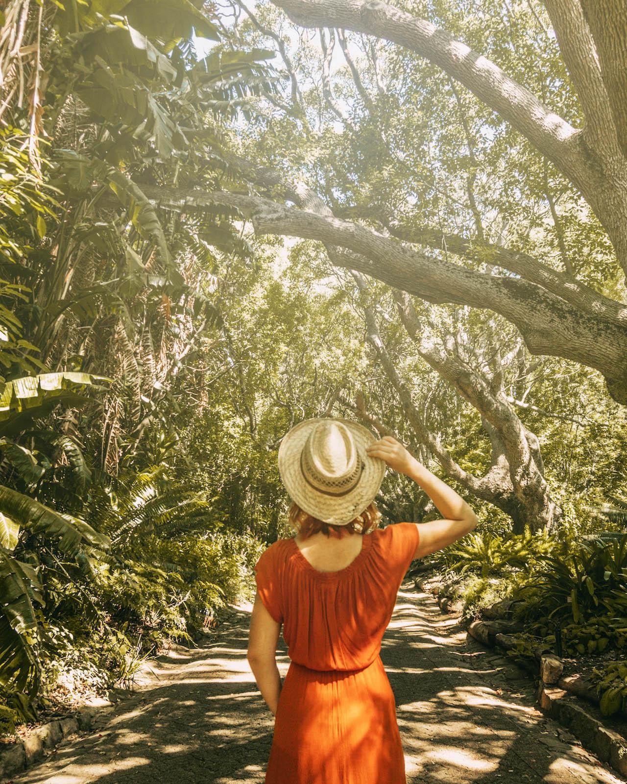 Kapstadt Sehenswuerdigkeiten Kirstenbosch National Botanical Garden
