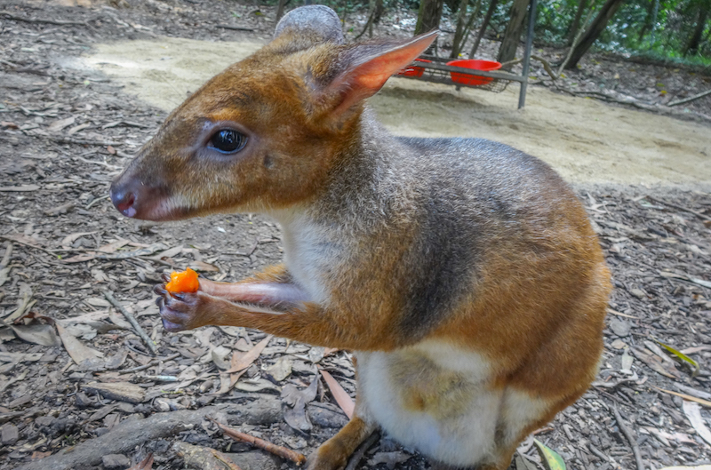 Australien Ostkueste Australia Zoo