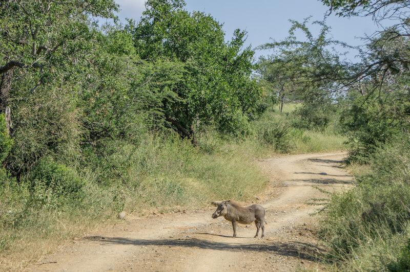 Hluhluwe iMfolozi Park Safari Suedafrika