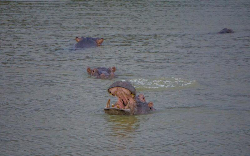 Hluhluwe iMfolozi iSimangaliso Wetland Park St Lucia