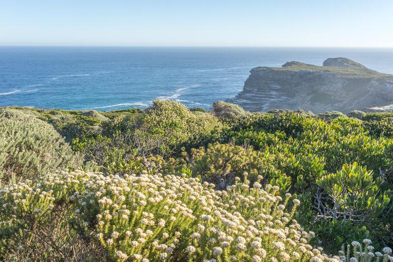 Kap Halbinsel Kap der Guten Hoffnung