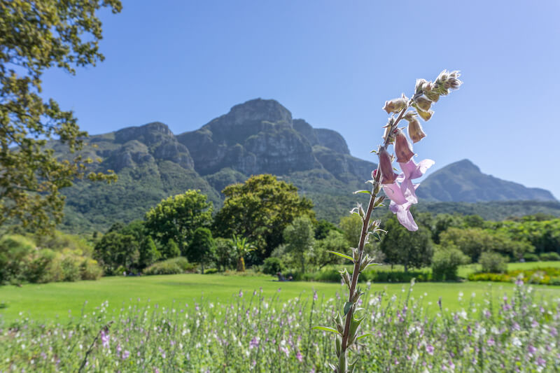 Kapstadt Urlaub Kirstenbosch Botanical Garden