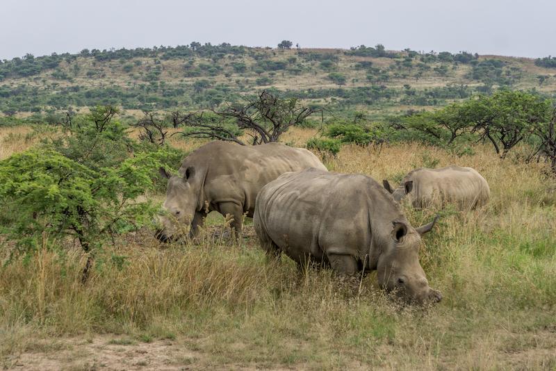 Rovos Rail Safari Suedafrika
