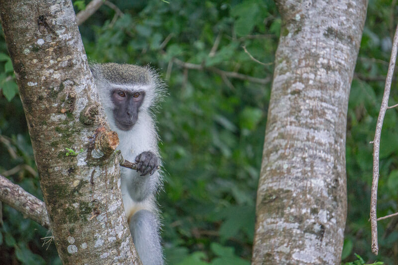 Safari Hluhluwe iMfolozi iSimangaliso Wetland Park Suedafrika