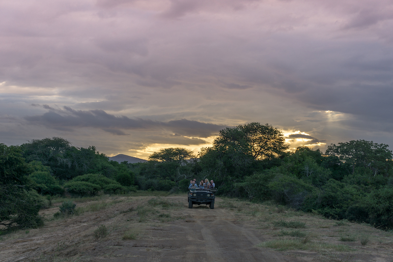 Safari in Suedafrika AndBeyond Phinda Private Game Reserve