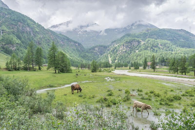 Graubuenden Schweiz Bernina Express