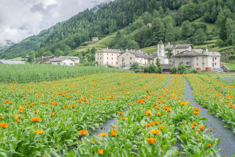 Graubuenden Schweiz Claudia Lazzarini Valposchiavo