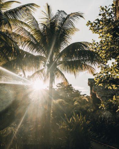 Natürlicher Mückenschutz auf Reisen
