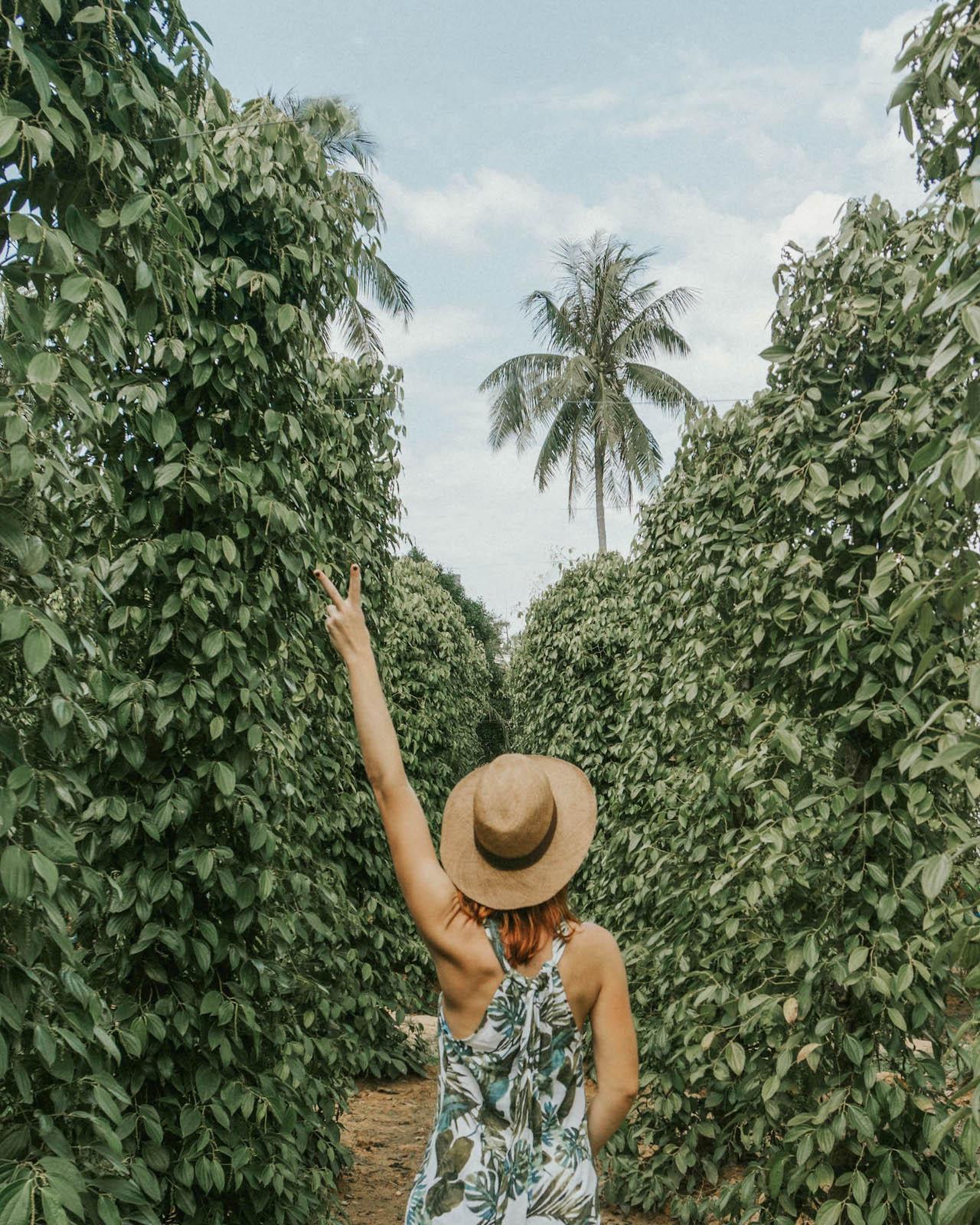 Phu Quoc Vietnam Pfefferfarm