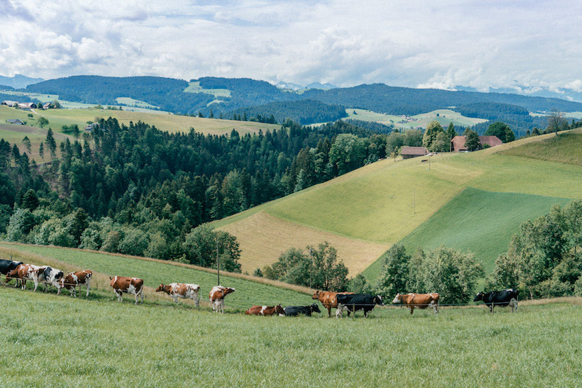 Emmental Herzroute