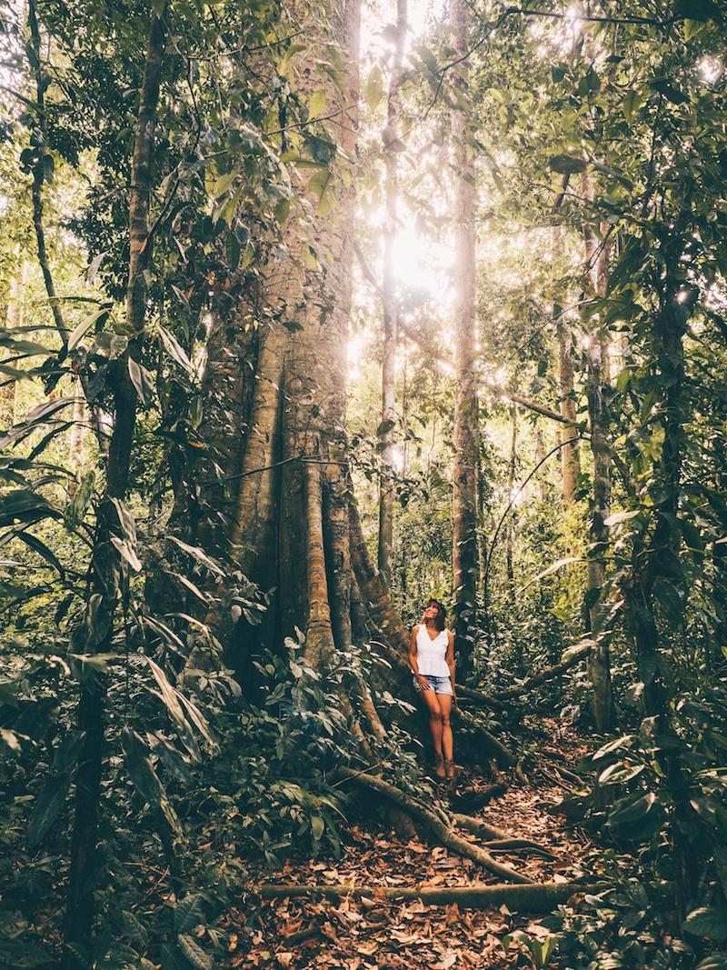 Amazonas Dschungel Peru