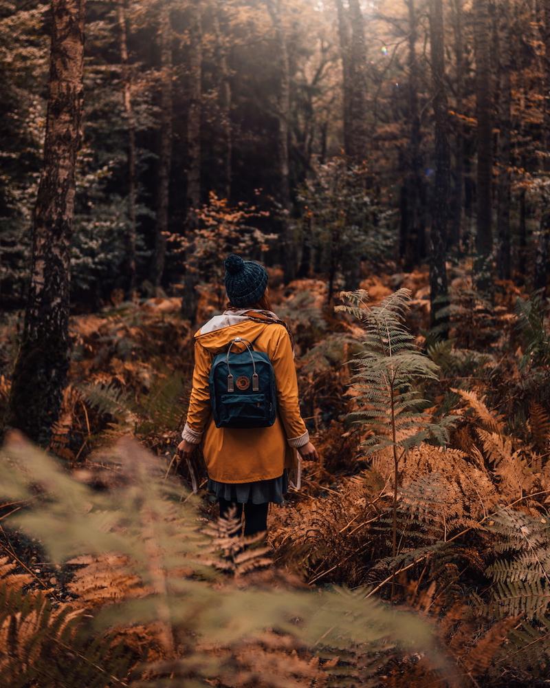 Herbst Nationalpark Eifel