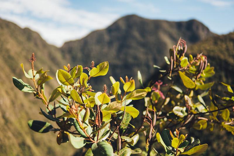 Inka Trail Ausblick