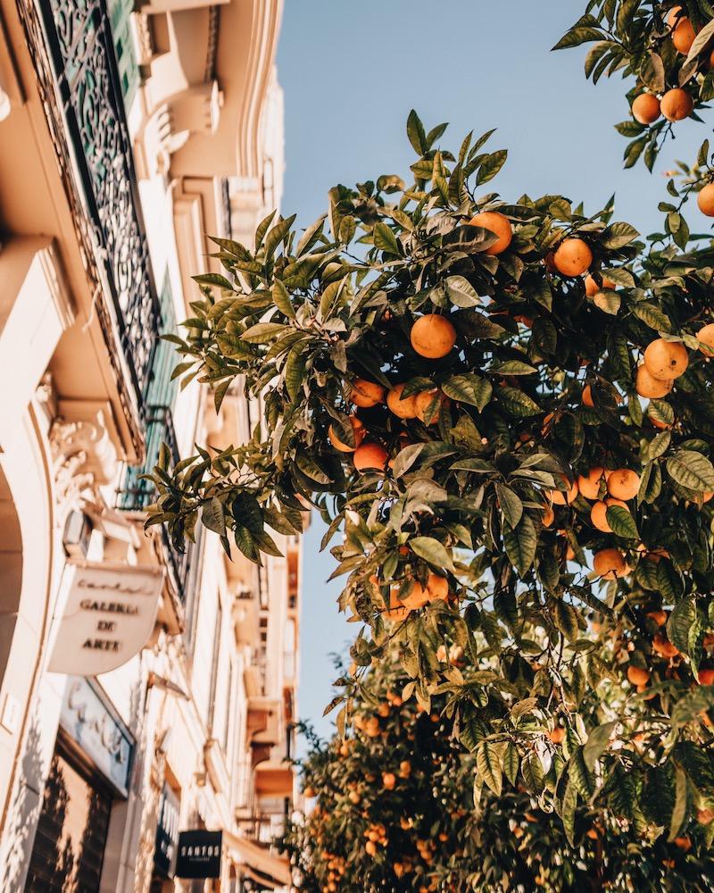 Malaga Sehenswuerdigkeiten Altstadt