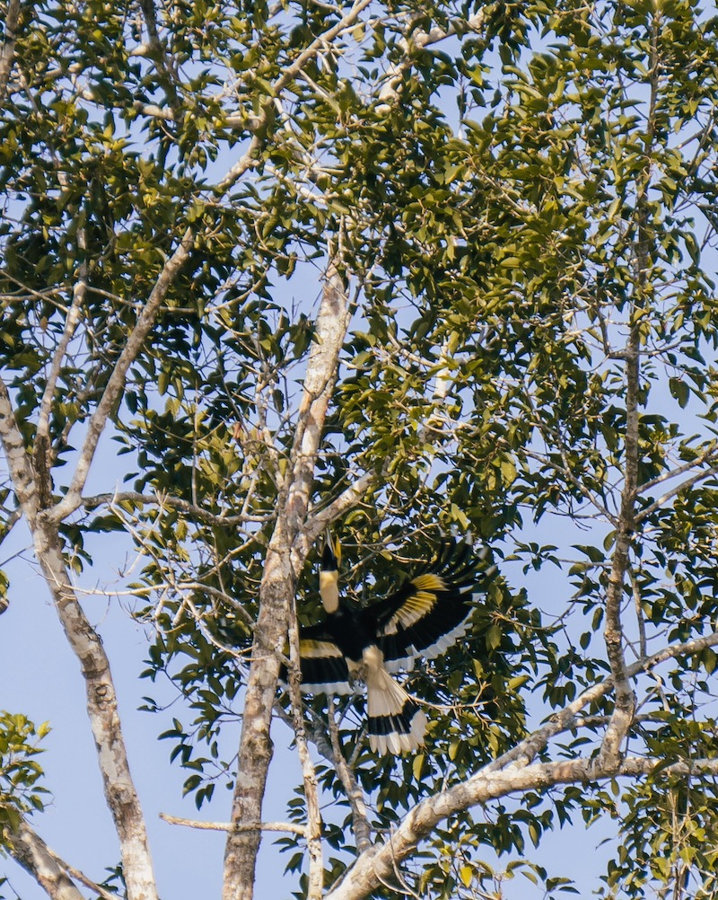Khao Sok Nationalpark Vogel