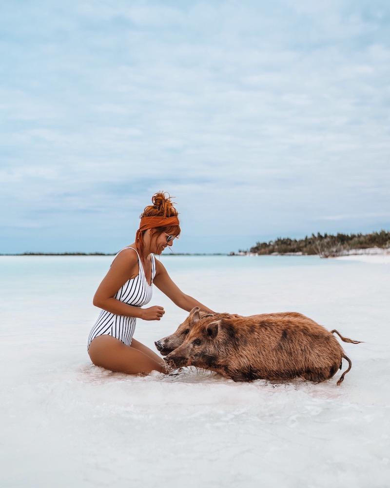 Long Island Bahamas schwimmende Schweine