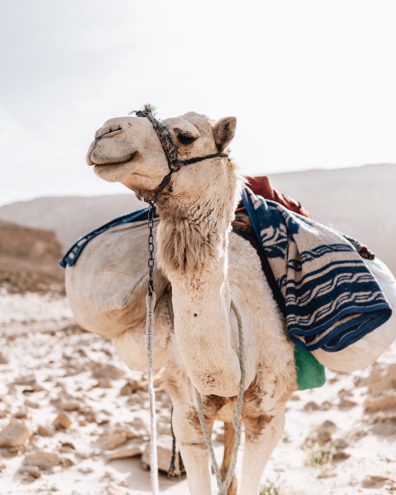 Wüstenreise Kamelreiten Ägypten