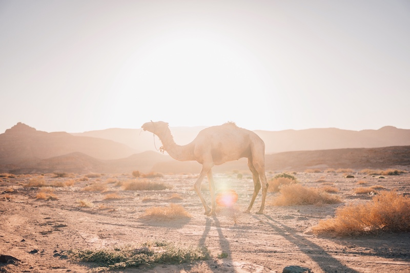 Wüstenreise Sonnenaufgang Wüste