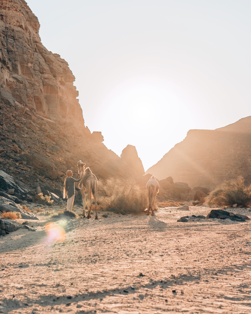 Wüstenreise Wüste Sinai Kamele