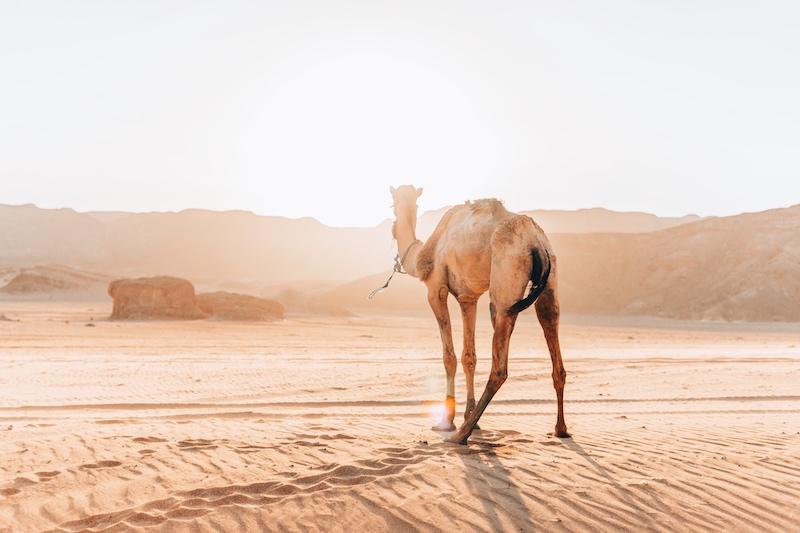Fragen zur Wüstenreise