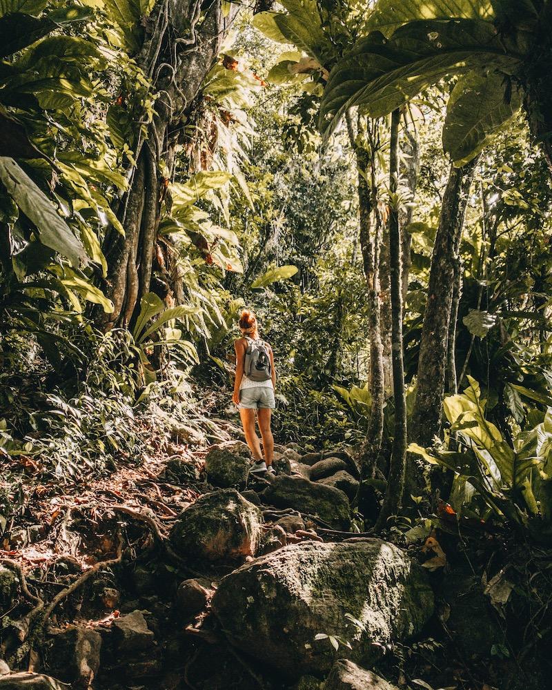 Saint Lucia Gros Piton Nature Walk