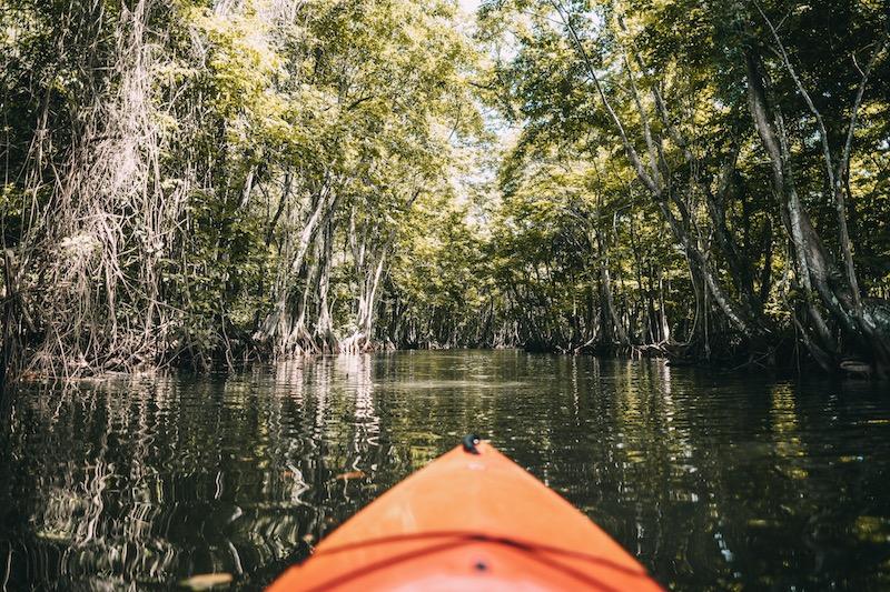 Saint Lucia Kajaktour Mangroven