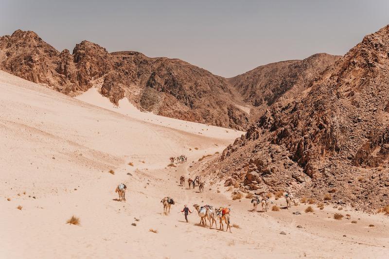 Wüste Sinai Kamele