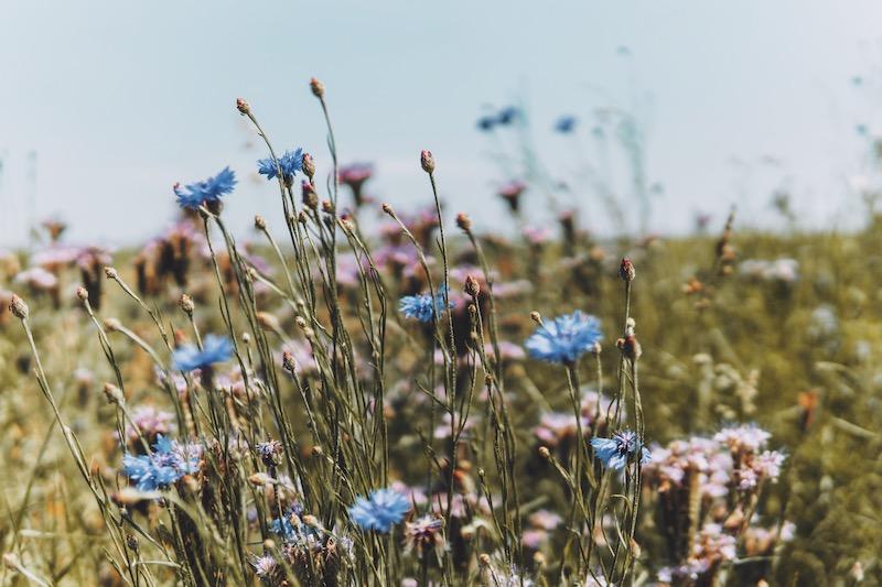 Hatzenporter Laysteig Schrumpftal Blumenwiese