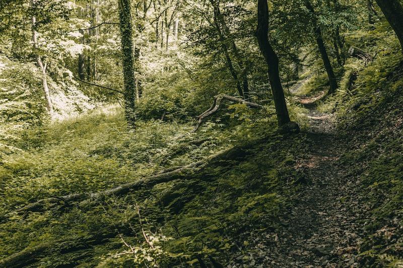 Hatzenporter Laysteig Wald