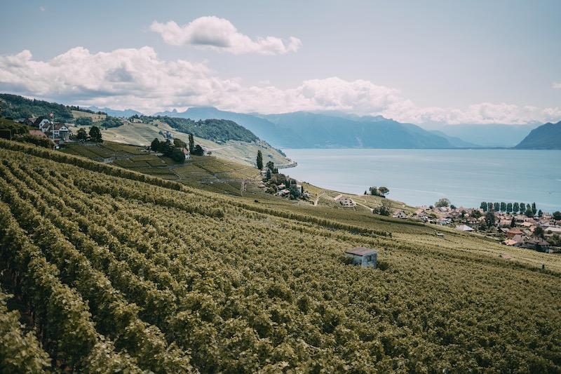 Lausanne Weinregion Lavaux