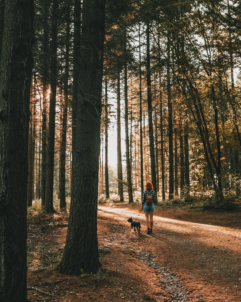 Mosel Urlaub Calmont Wanderung