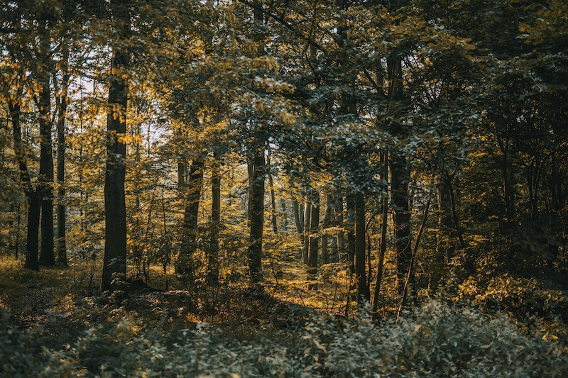 Waldbaden Naturpark Habichtswald Hessen