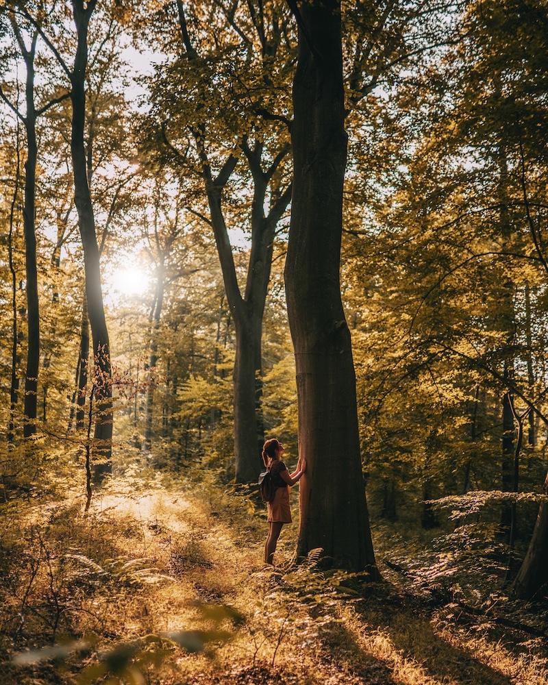 Waldbaden: Achtsamkeitswandern im Naturpark Habichtswald