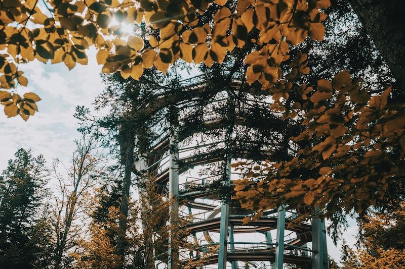 Ausflugsziele Stuttgart Baumwipfelpfad