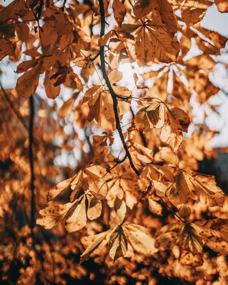 Goldener Oktober Herbst