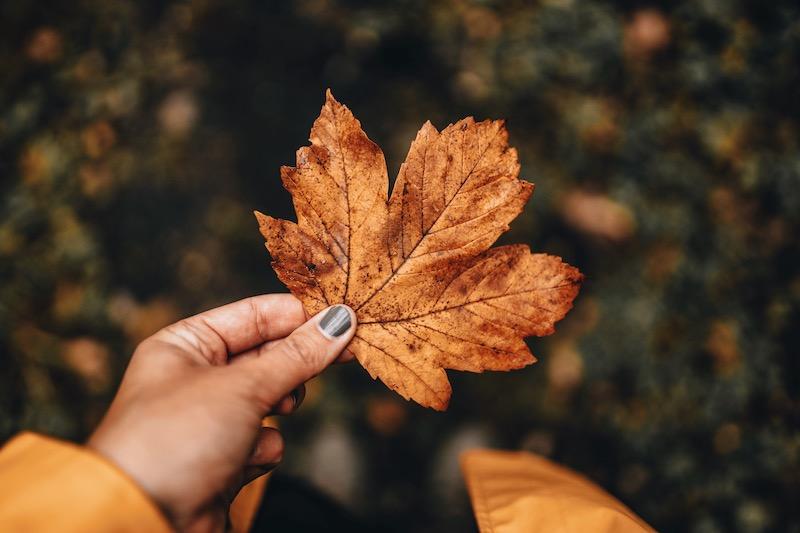Herbst 2019